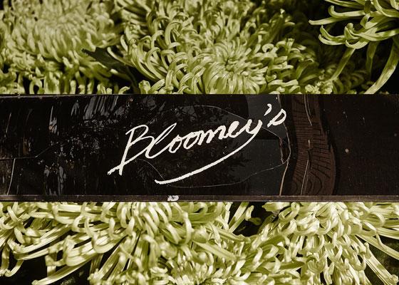 Bloomeys---Image-02